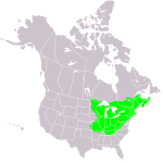 Hard maple grows in the Great Lakes region of North America and New England