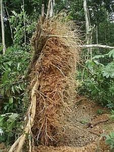 Copia de No roots